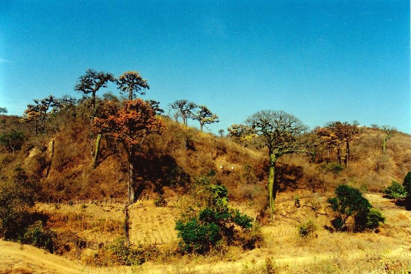 bosque-seco3