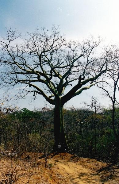 bosque-seco8