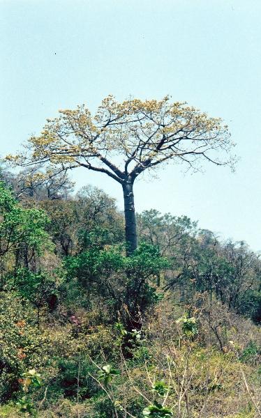 bosque-seco9